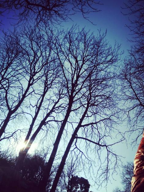 Sunny Morning Retiro Park